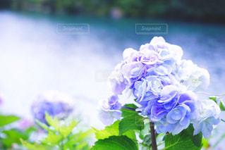 花の写真・画像素材[356731]