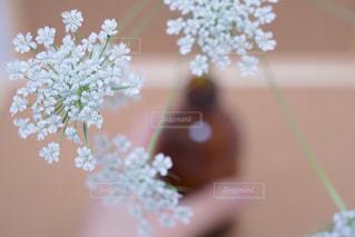 花の写真・画像素材[362463]