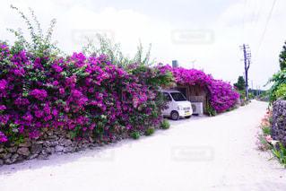 夏の写真・画像素材[368459]