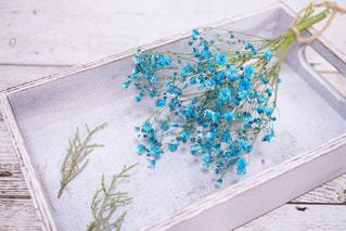 かすみ草の写真・画像素材[423354]
