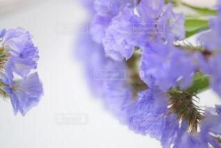 紫の写真・画像素材[511398]