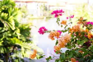 常夏の写真・画像素材[577060]