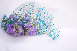 色鮮やかな青色に色付けされたカスミソウ。紫色のストックと合わせると、素敵な花束に💐の写真・画像素材[823535]