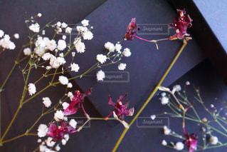オンシジウムとかすみ草のドライフラワーの写真・画像素材[906187]