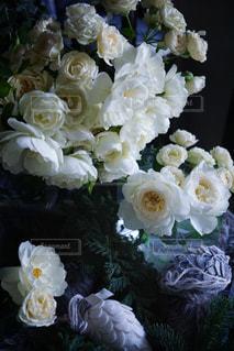 近くの花のアップの写真・画像素材[911233]