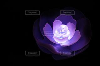 近くの花のアップの写真・画像素材[915631]