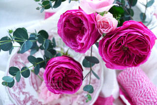 近くの花のアップの写真・画像素材[952736]