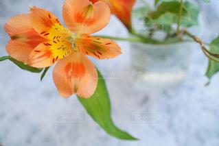 近くの花のアップの写真・画像素材[973558]