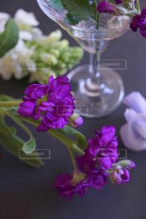 花あそびの写真・画像素材[1016219]