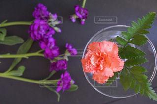 花あそびの写真・画像素材[1016221]