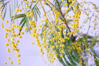 近くの花のアップの写真・画像素材[1035980]