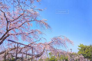 近くの木のアップの写真・画像素材[1089236]