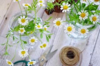 近くの花のアップの写真・画像素材[1131874]