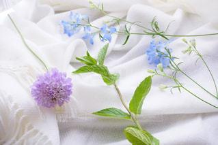 紫の花で満ちている白い花瓶の写真・画像素材[1157295]