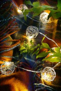 花の写真・画像素材[1183470]