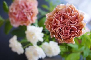 近くの花のアップの写真・画像素材[1184547]