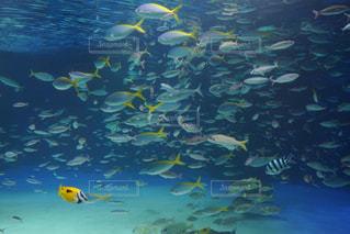 黄色と青の水の写真・画像素材[1188907]