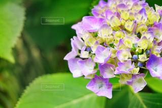 近くの花のアップの写真・画像素材[1204388]