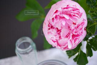近くの花のアップの写真・画像素材[1205780]