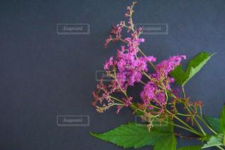 木の花の花瓶 - No.1205783