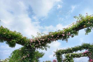 晴れた日にヤシの木のグループの写真・画像素材[1211348]
