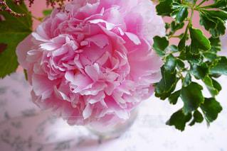 近くの花のアップの写真・画像素材[1211349]