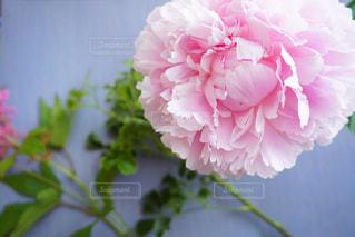 近くの花のアップの写真・画像素材[1211350]