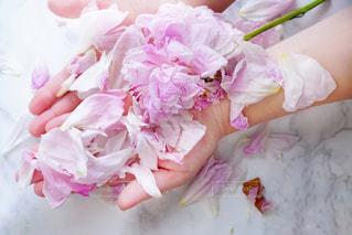 植物にピンクの花 - No.1218169