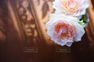 近くの花のアップの写真・画像素材[1223158]