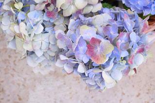 近くの花のアップの写真・画像素材[1232237]