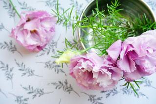 近くの花のアップの写真・画像素材[1239115]