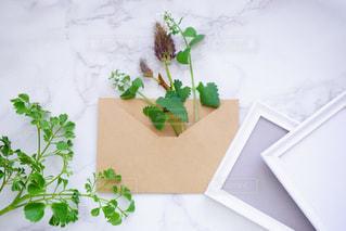 植物の花の花瓶の写真・画像素材[1271166]