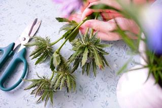 植物の花の花瓶の写真・画像素材[1311715]