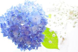 近くの花のアップの写真・画像素材[1381447]