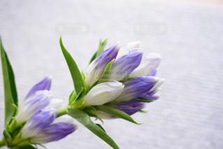 花の写真・画像素材[1421477]