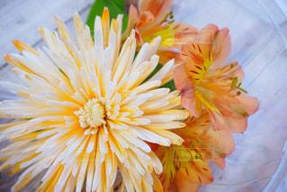 近くの花のアップの写真・画像素材[1585465]