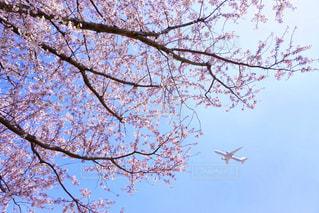 春の写真・画像素材[1995379]