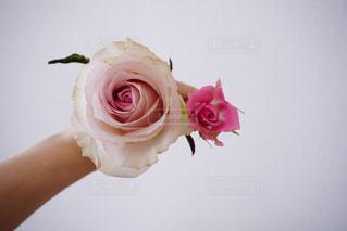 ピンクの花で満たされた白い花瓶の写真・画像素材[2107629]