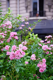 植物の上のピンクの花の写真・画像素材[2189998]