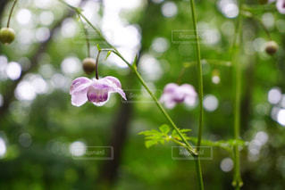花の写真・画像素材[2398127]