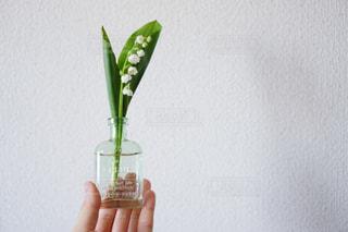 ガラスの花瓶を持つ手の写真・画像素材[3147783]