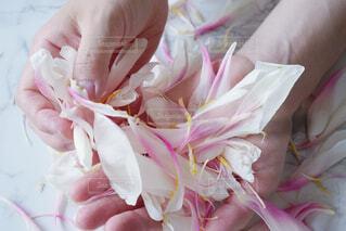 花のクローズアップの写真・画像素材[4560361]
