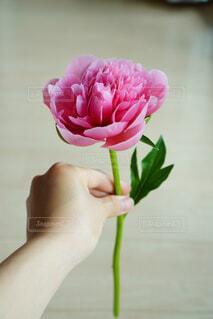 ピンクの花で満たされた花瓶の写真・画像素材[4560374]