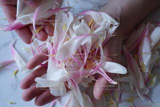 花のクローズアップの写真・画像素材[4560378]