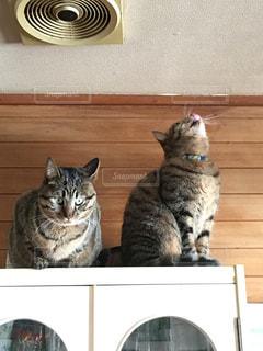 猫の写真・画像素材[343320]