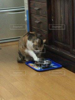 手を皿に入れる猫の写真・画像素材[343460]