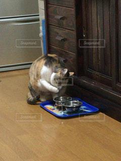 手を舐める猫の写真・画像素材[343461]