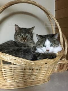 猫の写真・画像素材[393856]