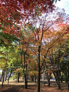 紅葉の公園の写真・画像素材[2791441]
