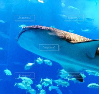 美ら海水族館の写真・画像素材[347087]